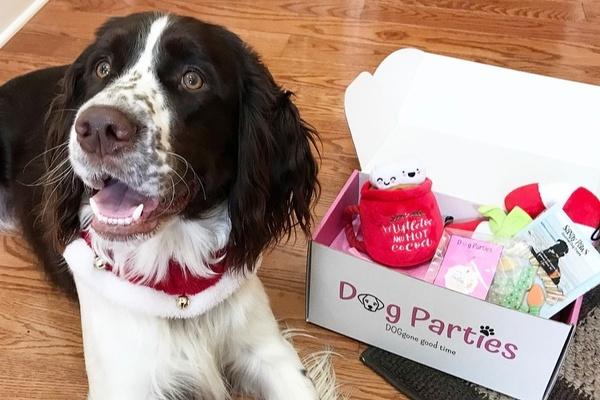 Dog Parties Photo 4