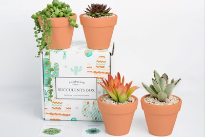 Succulents Box - Monthly Subscription Box Photo 2