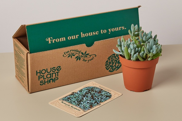 A subscription box called House Plant Shop, a terracotta pot with succulent in it and care instructions.