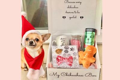 My Chihuahua Box  Photo 2