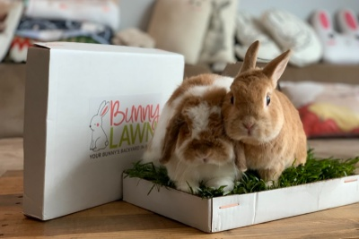 BunnyLawn Photo 3