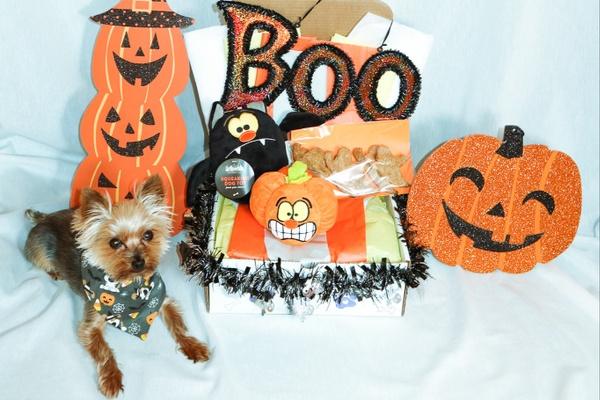 Themed Monthly Dog Box Photo 1