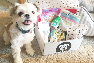 Dog Smile Box Photo 2