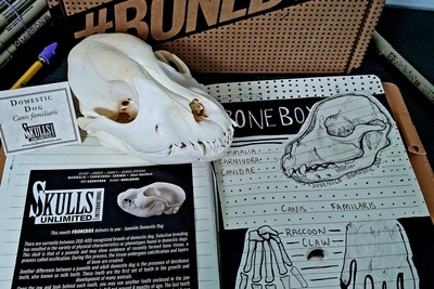 Skulls Unlimited's BoneBox Photo 3