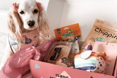 Darci's Dog Mom Box Photo 2