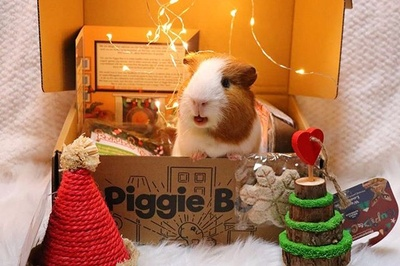 Piggie Box Photo 2