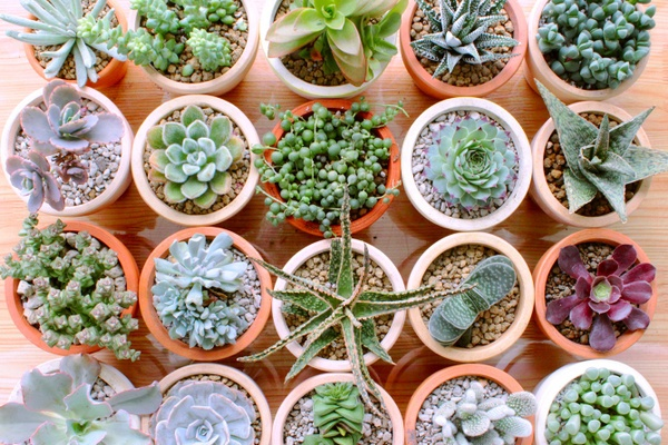 Succulents Box - Monthly Subscription Box