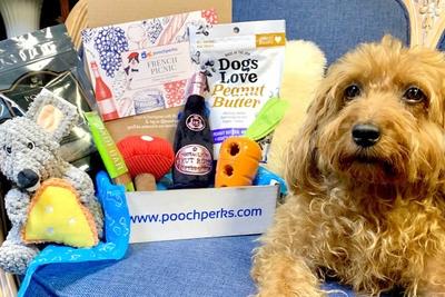Pooch Perks Premium Customized Dog Boxes Photo 3