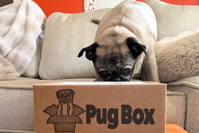 Pug Box Photo 3