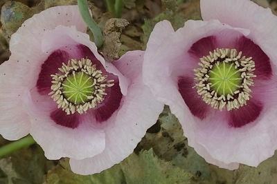 Bloomin' Bin Photo 2