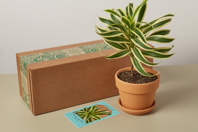 House Plant Box Photo 2