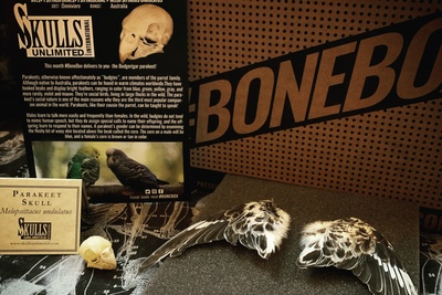 Skulls Unlimited's BoneBox Photo 2