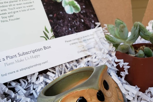 Adopt a Plant Box subscription box information sheet, ceramic owl pot and succulent plant