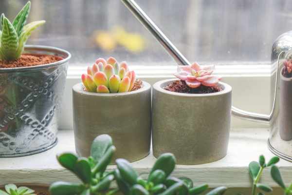 Monthly Succulent Studios Subscription Box Photo 1