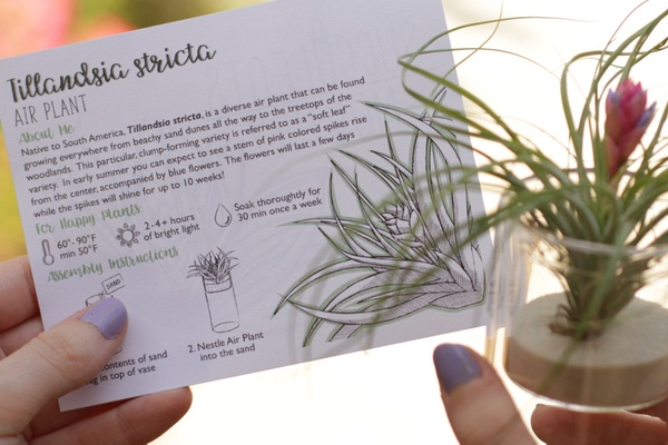 girl with purple nails reading information card about air plant and holding a new air plant from succulents monthly subscription box