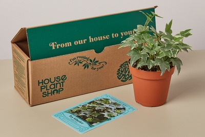 House Plant Box Photo 3