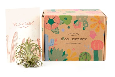 Succulents Box - Monthly Subscription Box Photo 3