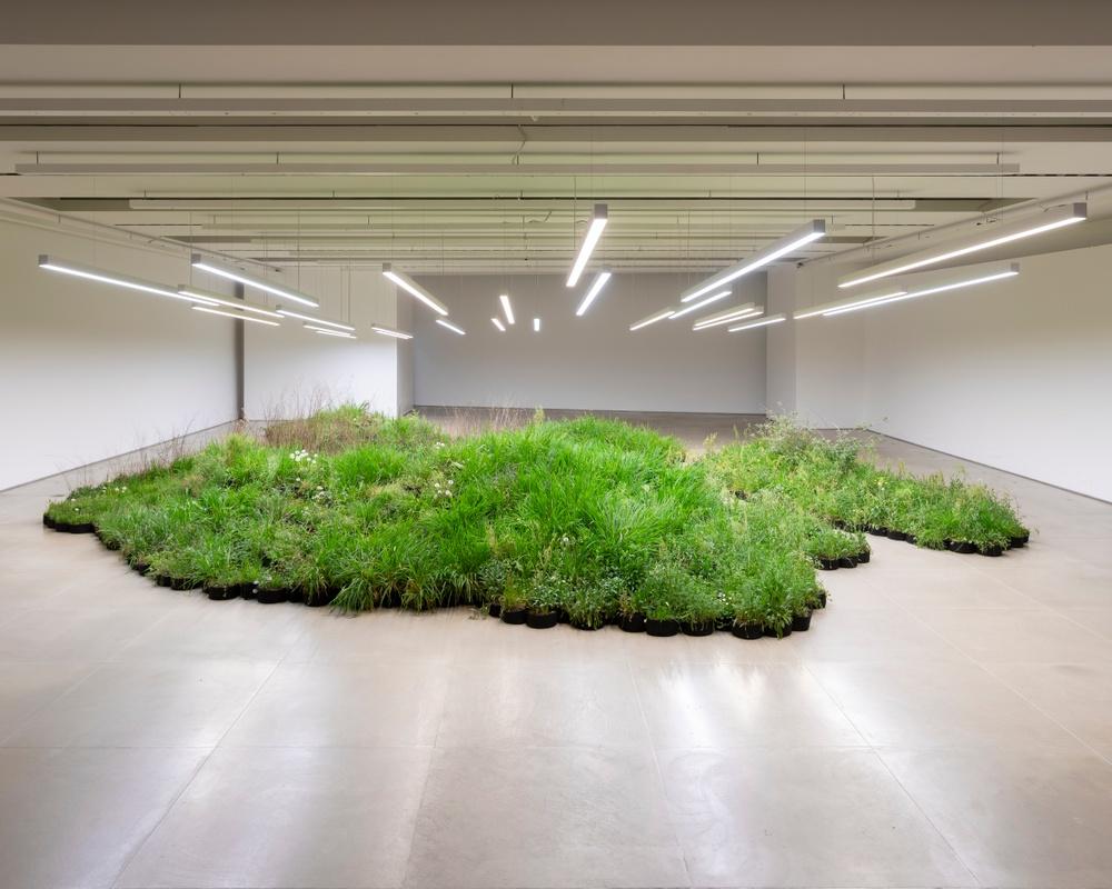 Cred: Adjacent Field, Milan, 2019. Linda Tegg. Bilden visar en tidigare installation med Linda Tegg.