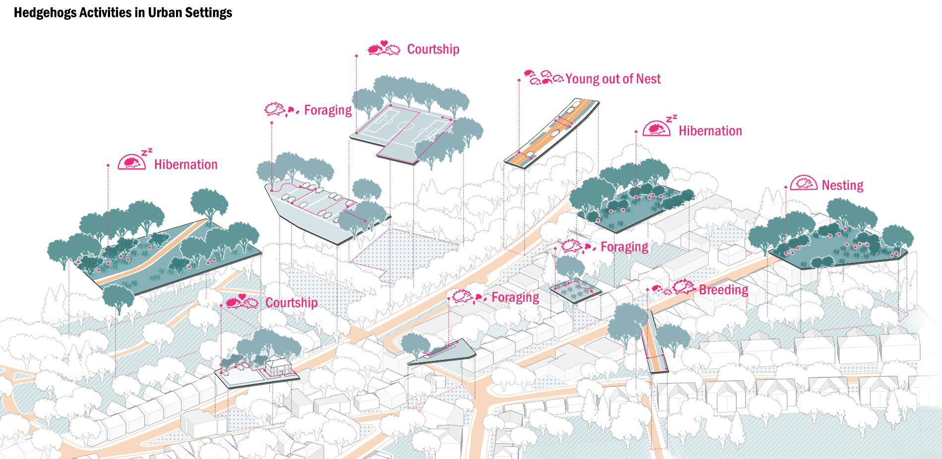 Hedgehogs Activities in Urban Settings