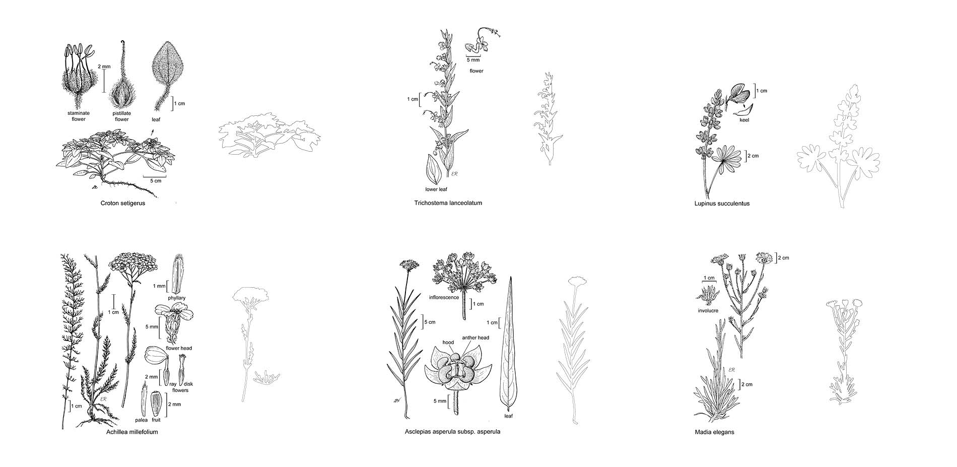 Sourcing the Botanical Drawings