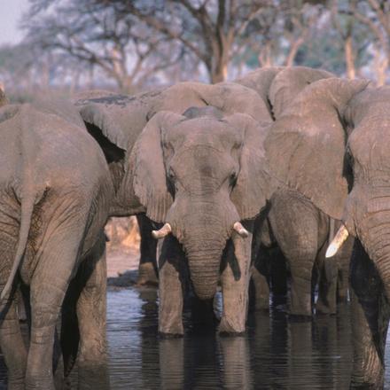 Botswana & Zimbabwe Lodge Safari