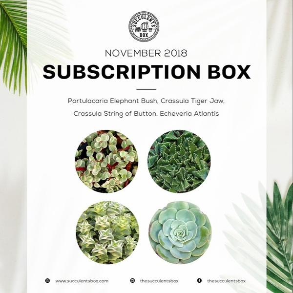 November 2018 Succulents Box