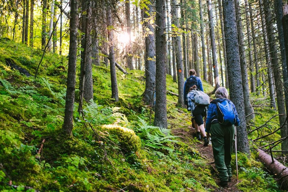 Sju av tio svenskar vill vistas mer i skogen. Foto: Matilda Holmqvist