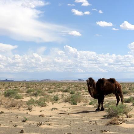 Meeting nomads in desert & steppes