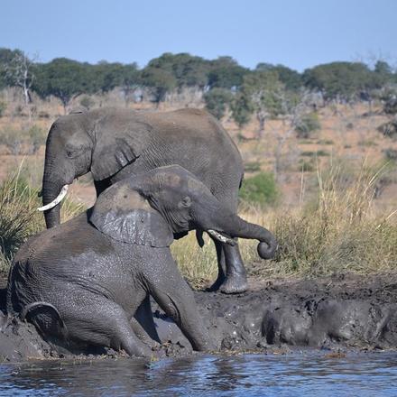 Victoria Falls & Chobe Adventure 4D/3N (from Livingstone)