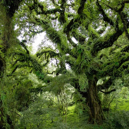 Trekking in Bale mountains National Park- 4 Days