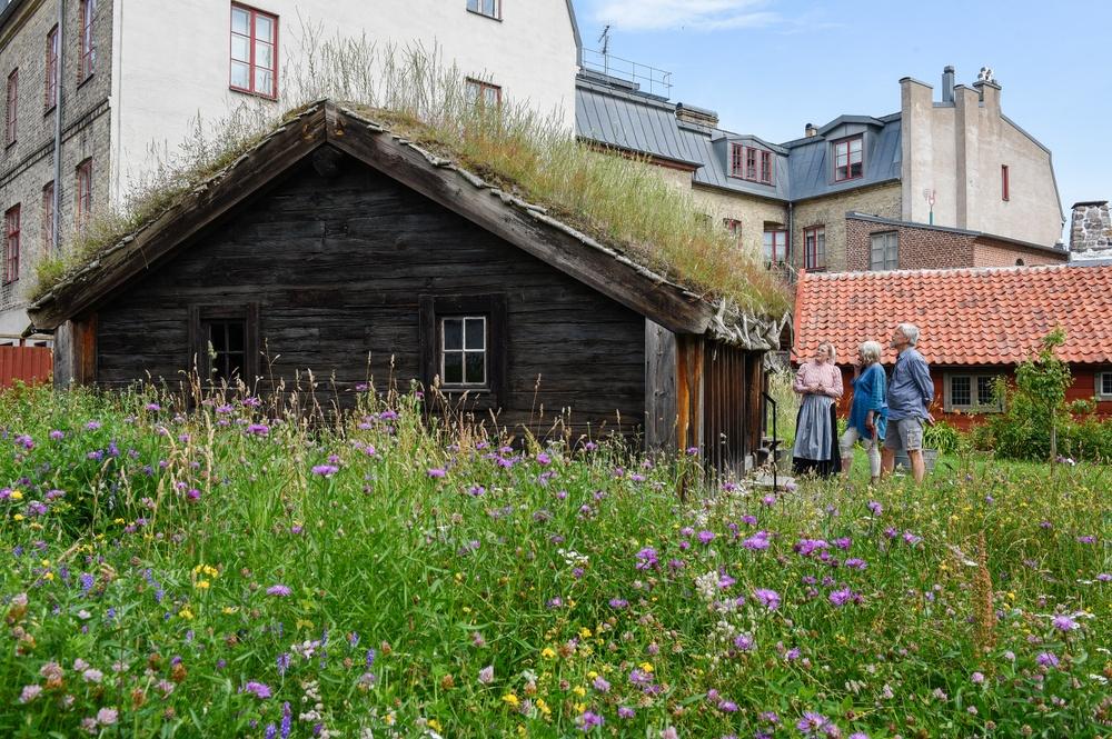 Bosmålatorpet i början av juli. Foto: Viveca Ohlsson/Kulturen
