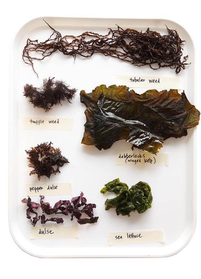 seaweed masterclass