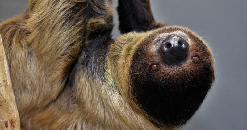 Sloth meet and greet downtown aquarium denver encounters sloth meet and greet denver m4hsunfo