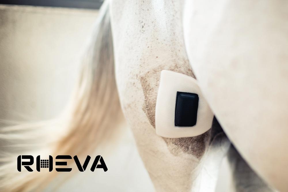 Rheva sårskydd på hästben.