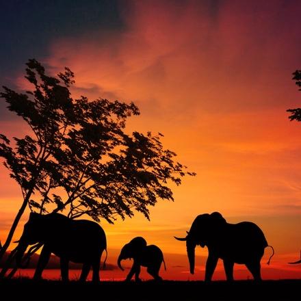 A Masai Mara & Serengeti Safari. Wildlife, Migration & The Big Five. A Tanzania & Kenya Photo Tour