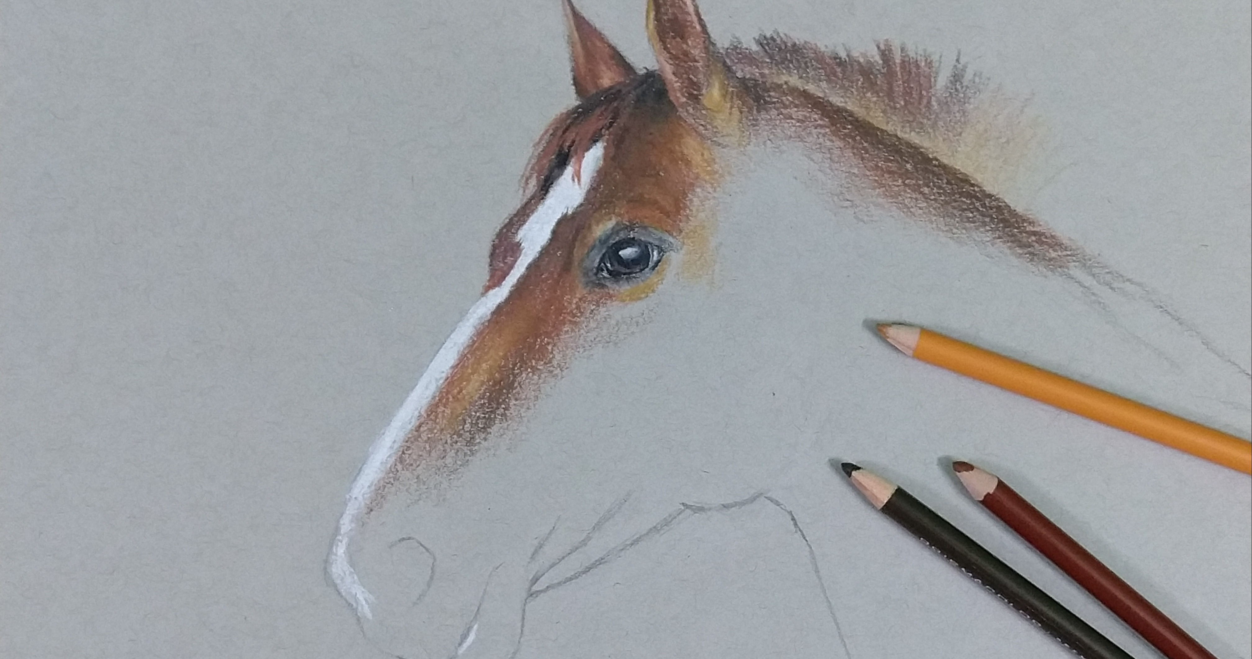 How to draw horses summer camp