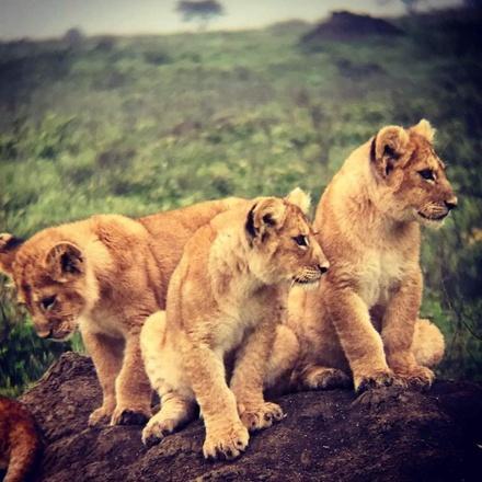 Camping Safari To Manyara, Serengeti and  Ngorongoro.