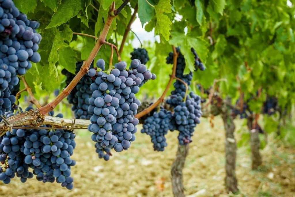 grapes-1024x683.jpg