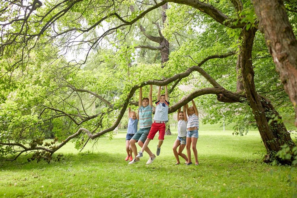Fem barn som leker i träd på sommaren.