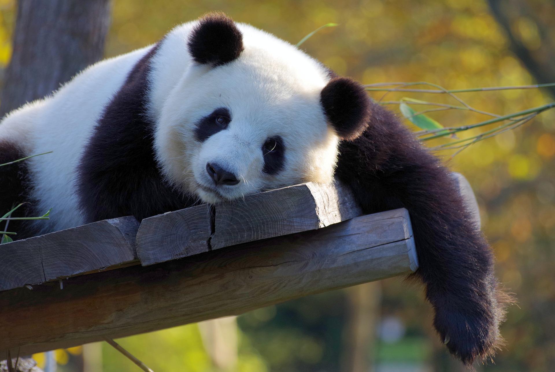 Python pandas tutorial: Getting started with DataFrames
