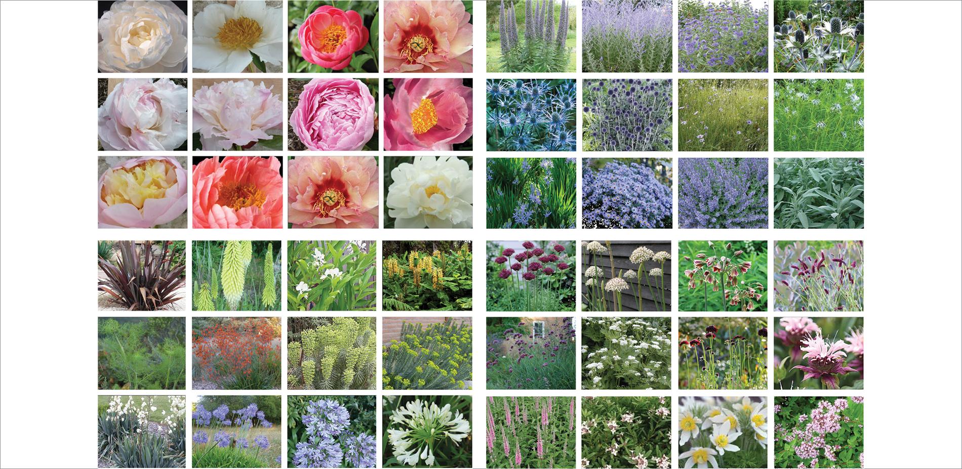 FLOWERS OF MASHCOURT