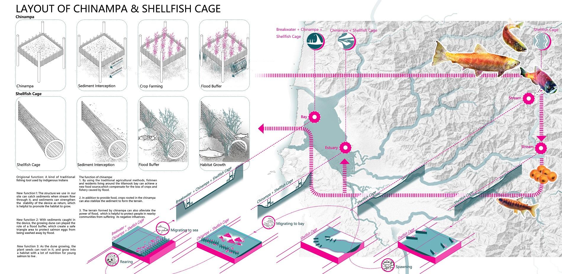 Layout of chinampa & shellfishcage