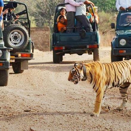 Rajasthan | Ranthambhore