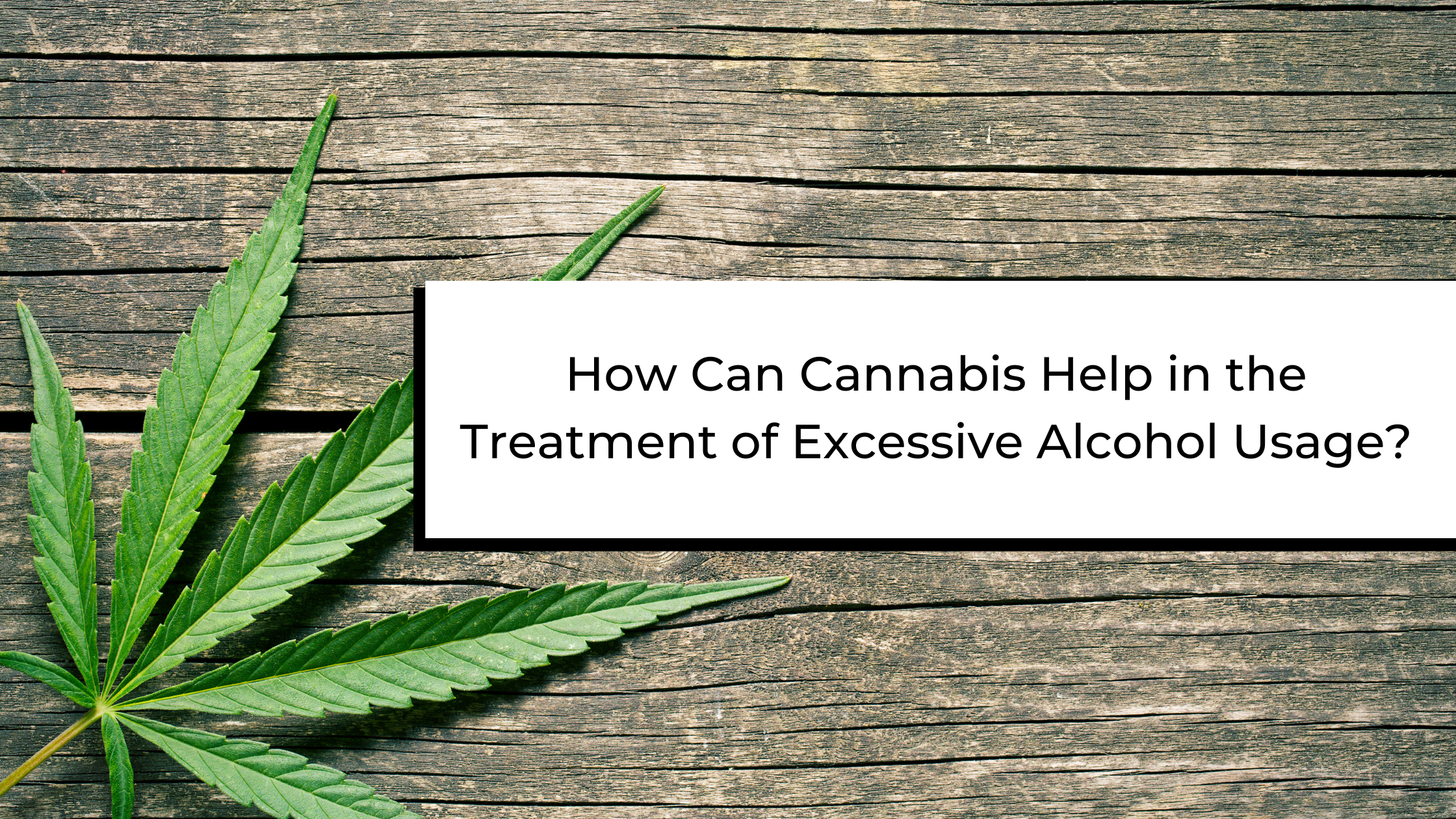 @medicate_oh Latest stories: Could Cannabis Help the Harmful Impacts of Excessive Alcohol Usage? Link Thumbnail   Linktree