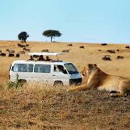 wildebeest migration special luxury safari
