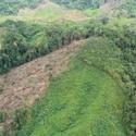 http%3A%2F%2Fassets.kompas.com%2Fdata%2Fphoto%2F2012%2F11%2F13%2F1126505-adh----lokasi-pembukaan-hutan--780x390.jpg