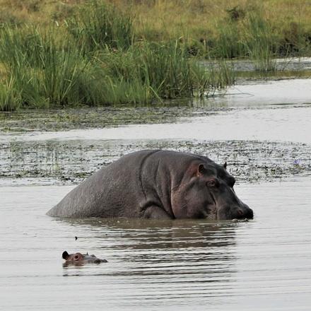 Ololo Wildlife and Community