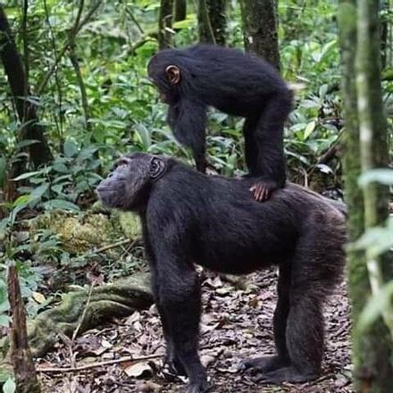 4 Days Explore Murchison Falls National Park