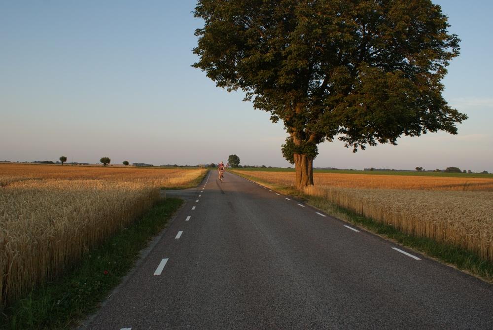 Träd och cyklist vid landsväg, skymning