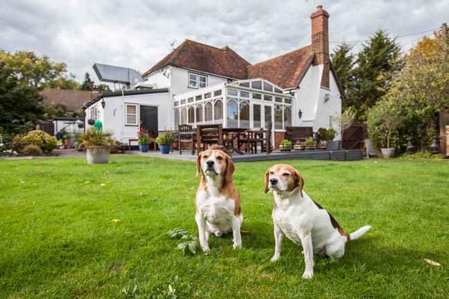 orwells-beagles